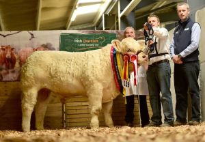 junior-male-calf-champion-exhibited-by-mick-kavanagh-and-sponsor-gordan-richardson-greenvale