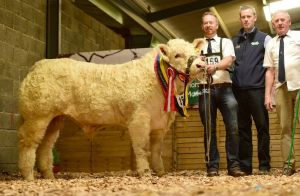 senior-male-calf-champion-clenagh-lyle-with-barry-and-michael-quinn-with-gordan-richardson-greenvale-sponsor