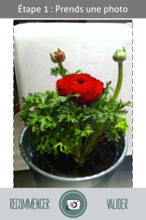 L'herbier digital de l'Institut Klorane (2)- Charonbelli's blog lifestyle