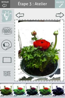 L'herbier digital de l'Institut Klorane (3)- Charonbelli's blog lifestyle