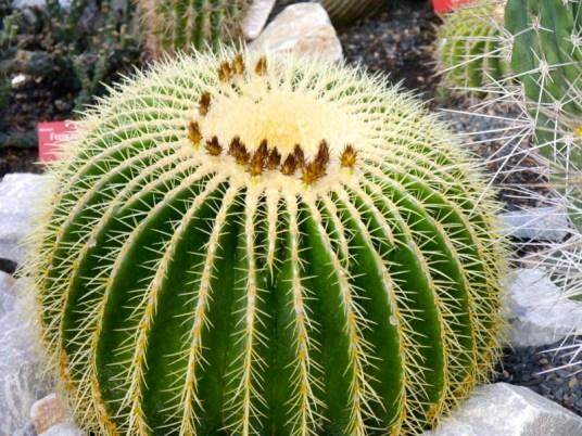 Ma journée de rêve à Terre d'Avoine avec A-Derma (6) - Charonbelli's blog beauté