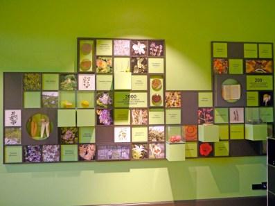 Conservatoire-botanique-Pierre-Fabre(2)-Charonbellis