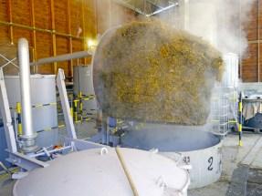Et une partie de la récolte après la distillation