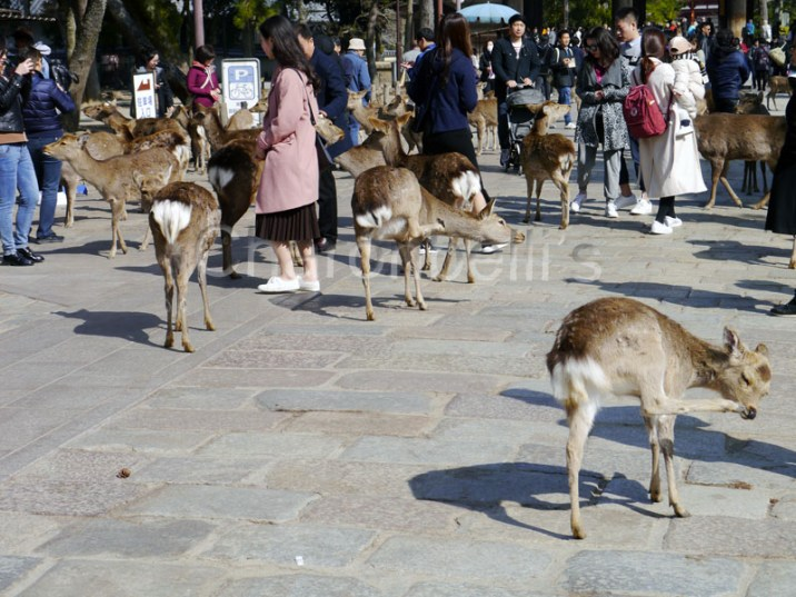 Nara(1)-Japon-Visiter-Kyoto-en-5-Jours-Charonbellis