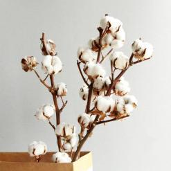 Tiges-de-coton-Four-Seasons-Flower-Charonbellis