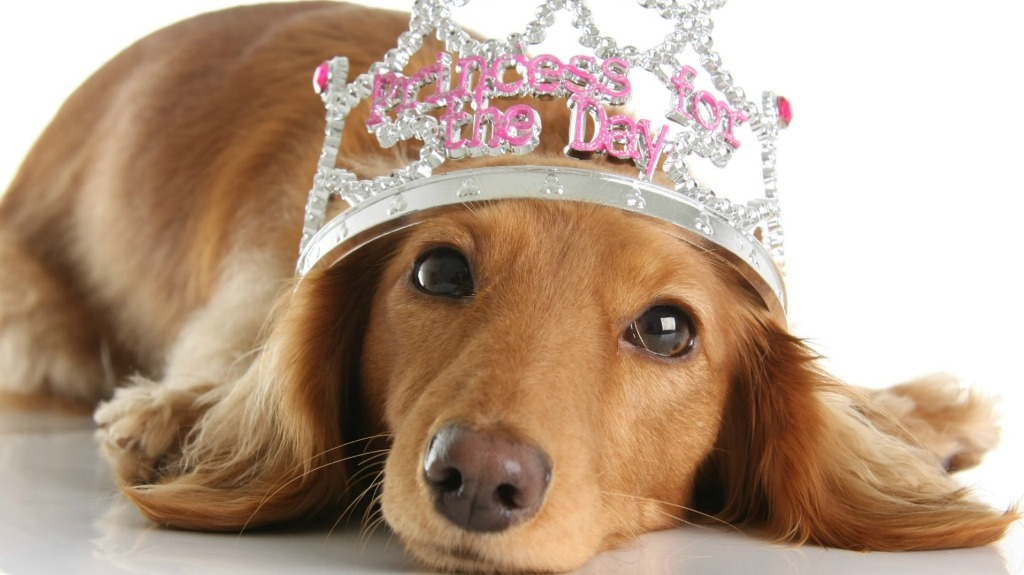 Wonderful Fur Brown Adorable Dog - Dog-Names  Pictures_909941  .jpeg?resize\u003d1021%2C575\u0026ssl\u003d1