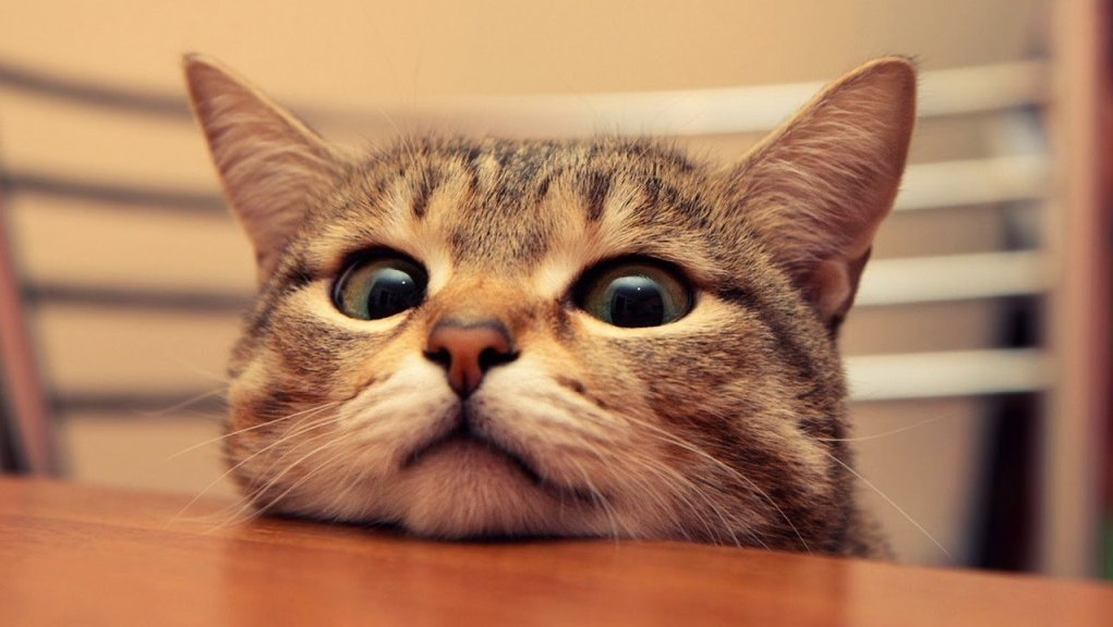 130 funny cat jokes to make your day