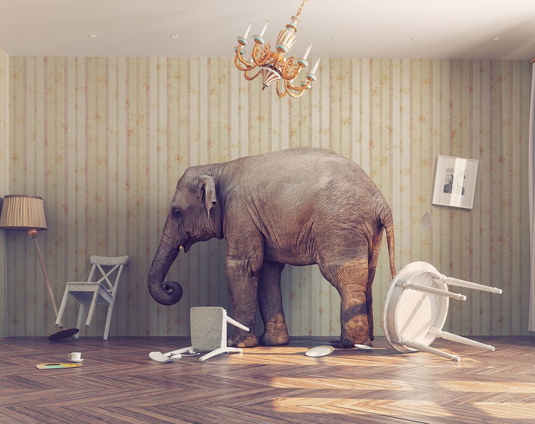 How to use the elephant in the room to your advantage   CharTec
