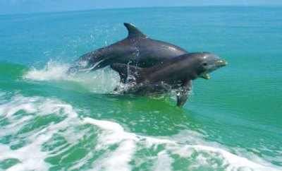 florida-GENERAL-dolphins
