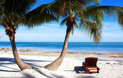 florida-palm-tree-and-chair-shore