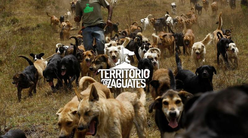 """""""Собачий рай"""": у горах Коста-Рики працює унікальний ..."""