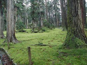 ふるさとの魅力を語ろう!景観づくり団体のつどい もう少し近づいて見た平泉寺の苔/どこまでもアマチュア