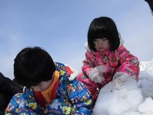 さかだに雪まつり 雪の下の野菜収穫体験に参加したい妹/どこまでもアマチュア
