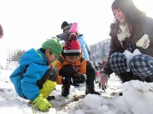 さかだに雪まつり 雪の下の野菜収穫体験に熱中する親子/どこまでもアマチュア