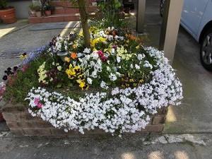 ミニミニ家庭菜園&ミニガーデニング パンジー、ビオラなどが咲いている花壇/どこまでもアマチュア