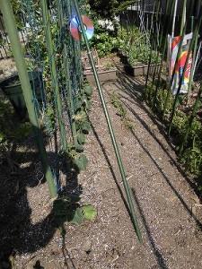 ミニミニ家庭菜園&ミニガーデニング キュウリの苗を植えた畝/どこまでもアマチュア
