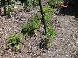 ミニミニ家庭菜園&ミニガーデニング 発展途上の畝/どこまでもアマチュア