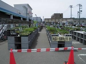 日曜大工自習教室~ズブの素人編~ 野菜の苗売り場/どこまでもアマチュア