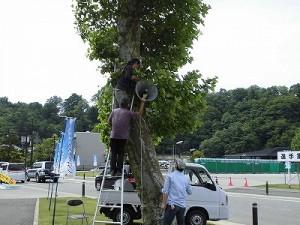 第51回越前大野名水マラソン 樹木にトランペットスピーカーを設置しているPA係員/どこまでもアマチュア