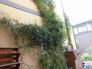 ミニミニ家庭菜園&ミニガーデニング 繁茂するつる植物/どこまでもアマチュア