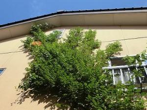 ミニミニ家庭菜園&ミニガーデニング ノウゼンカズラ/どこまでもアマチュア