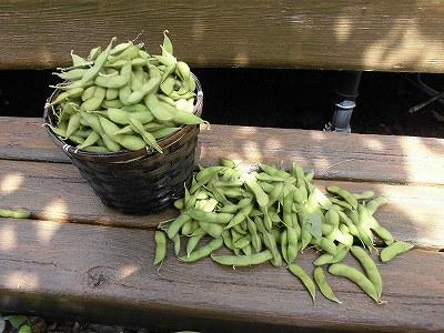 ミニミニ家庭菜園&ミニガーデニング Lesson8_2015