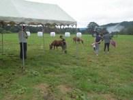 ポニー乗馬体験コーナー