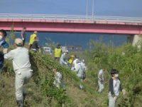 セイタカアワダチソウを運ぶボランティア