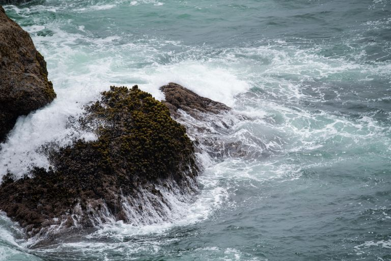 Waves splashing against the rocks near the gray whale.