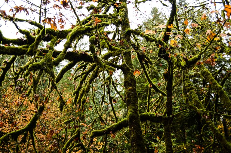 mossy trees with leaves