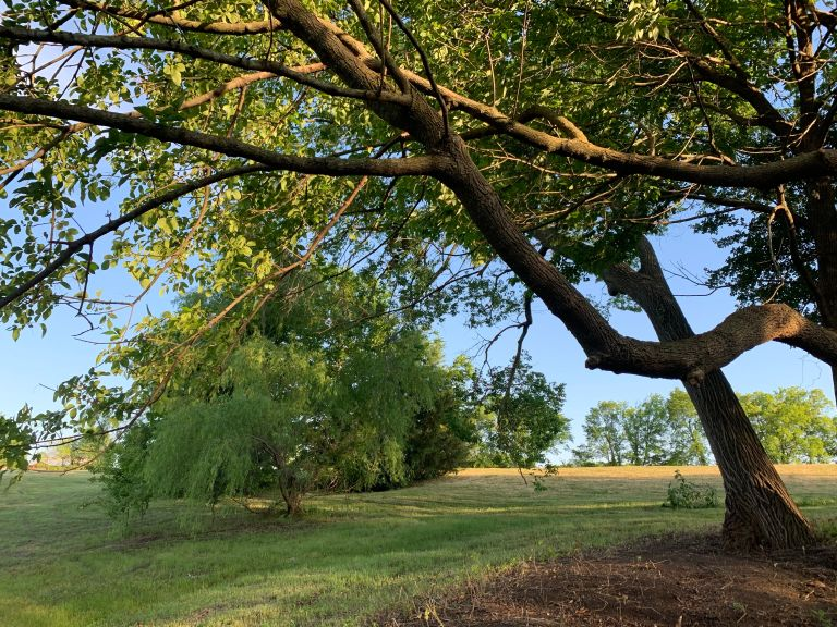 tree with branches in grassy field