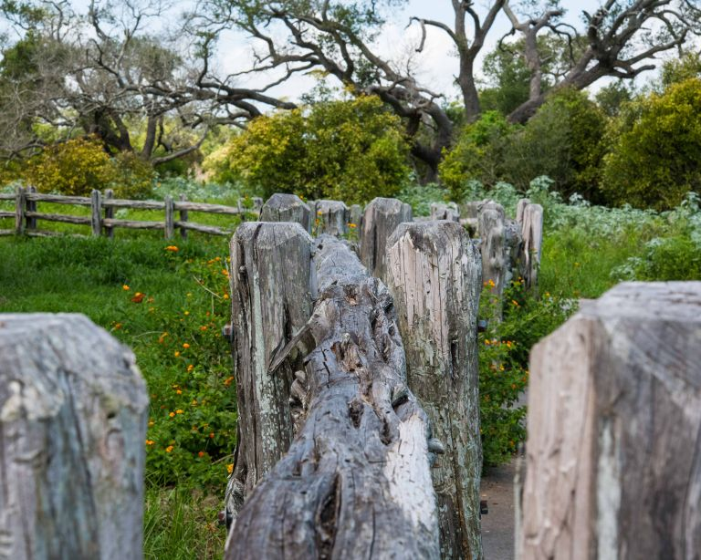 Wooden fence posts, with a live oak tree in the background.