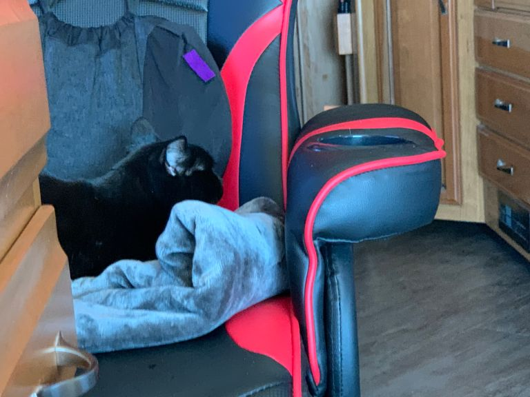 A cat on a blanket on an office chair, facing the back of the chair.