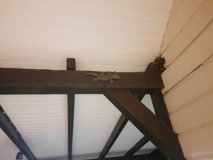 Lenas Baby Krokodil auf unserer Veranda
