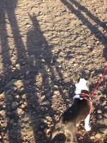 Big dog shadow