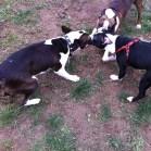 Ace, Wiley, and Porter tug