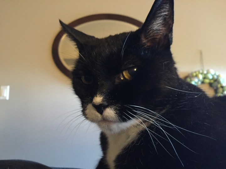 Baxter the Cat