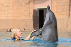 Dubai Atlantis Dolphin