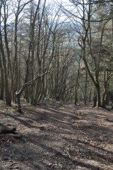 Trees on the slope of the Wrekin
