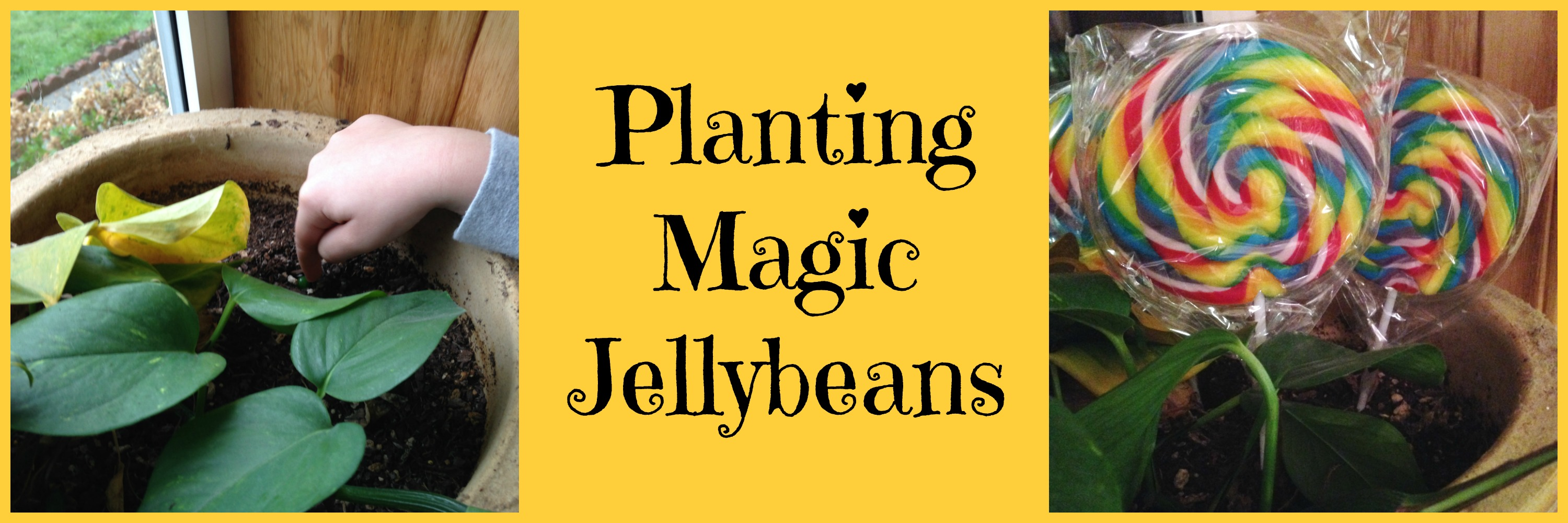 Planting Magic Jellybeans Fun And Easy Easter Tradition