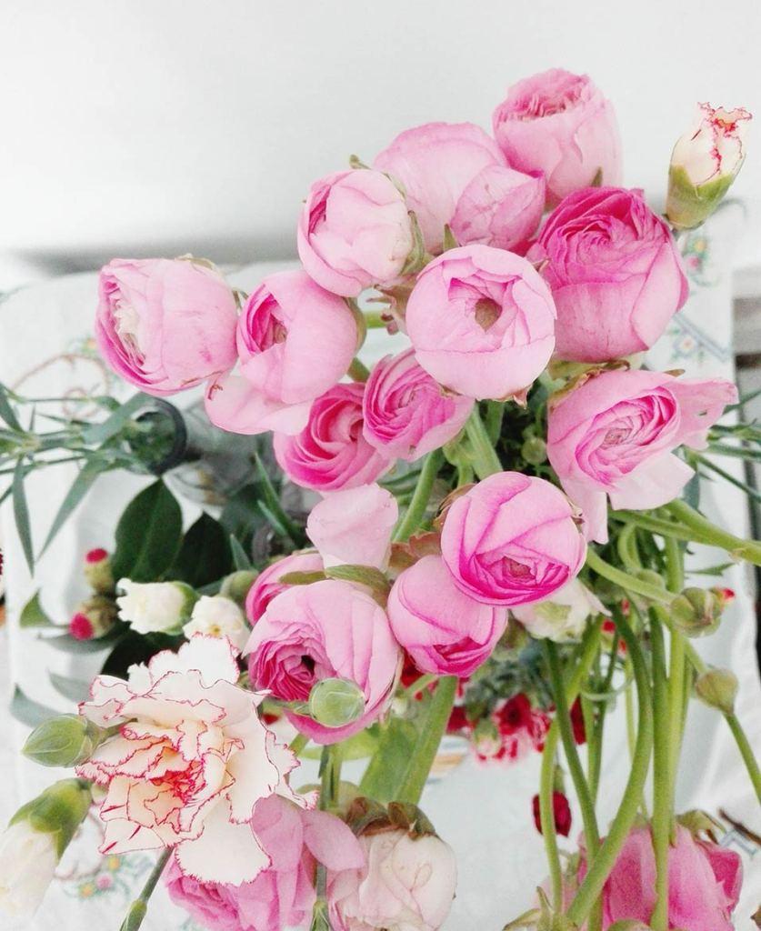 ranuncoli rosa