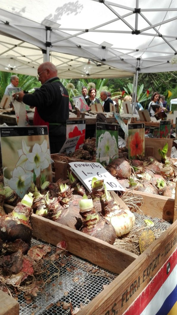 bulbi a planta 2018 orto botanico di napoli