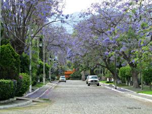 Street in La Floresta, Ajijic