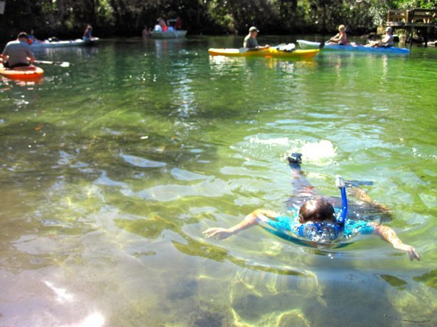 hunter snorkeling with manatees