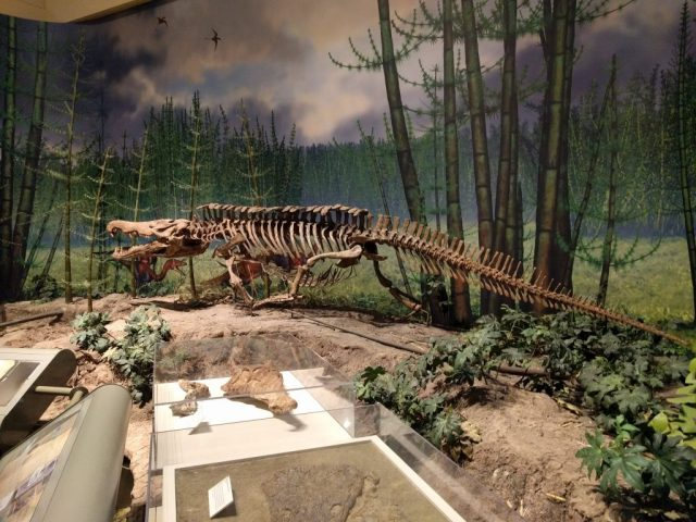 Mount of the phytosaur Redondasaurus at the Carnegie Museum of Natural History.