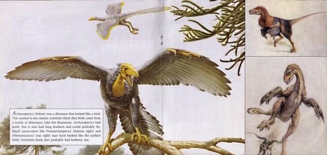 Archaeopteryx etc.