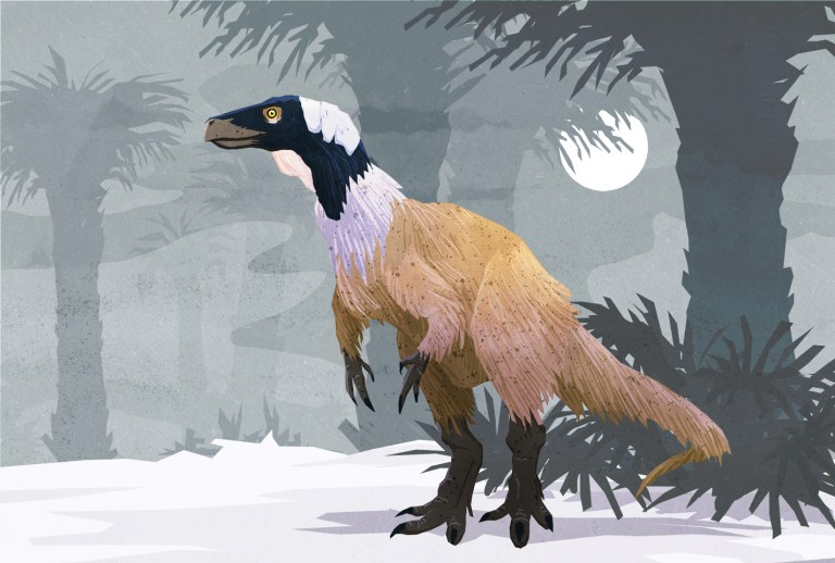 Illustration of Herrerasaurus ischigualastensis by Stavros Svensson Kundromichalis. Shared here with the artist's permission.