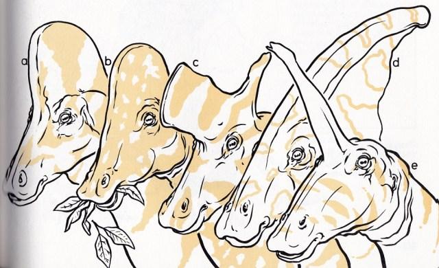 Field Guide hadrosaur heads