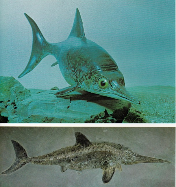 Ophthalmosaurus by BM(NH)