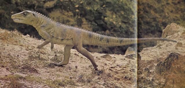 Ornithosuchus by Royal Scottish Museum